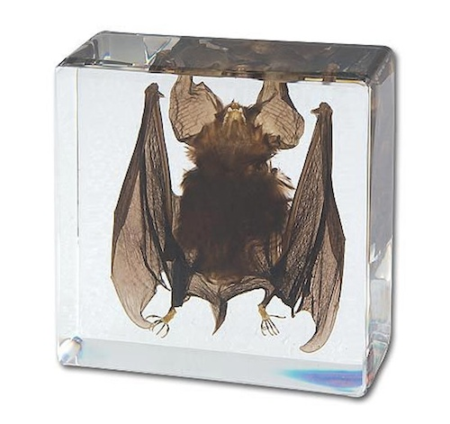 ...and a good ol' fashioned preserved bat.
